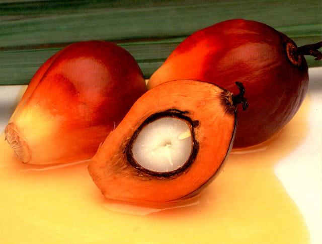 RBD Palm Oil (RBD PO)