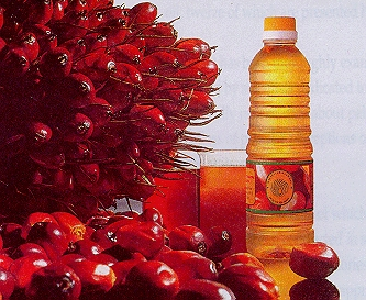 Neutralised, Bleached & Deodorised (NBD) Palm Oil