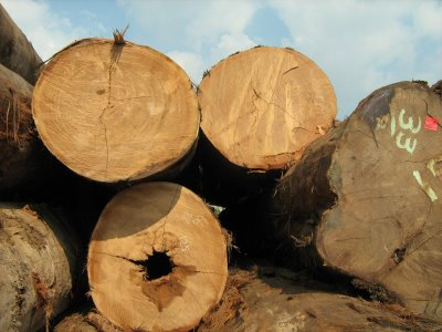 Buy Selangan Batu Round Log