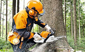 Buy Petrol chain saws for forestry
