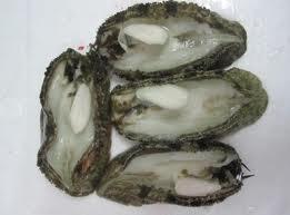 Scallop Frozen Local Abalone – Winner Frozen Food Trading,company