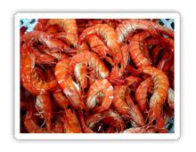 Buy Shrimps