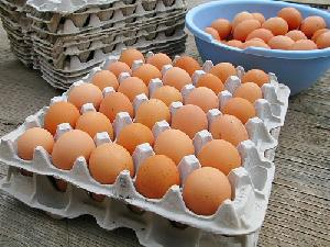 Buy Fresh Chicken Table Eggs