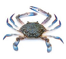Buy Blue Swimming Crab (Portunus Pelagicus)