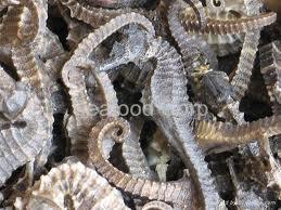 Buy Dried seahorse