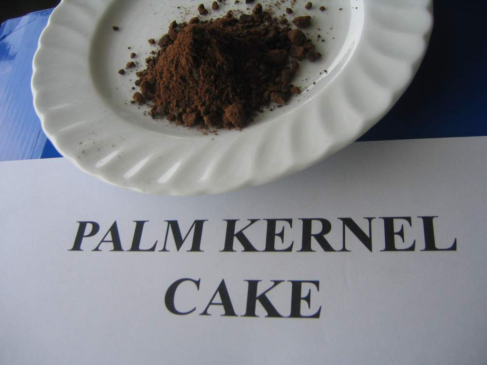 Buy Palm kernel cake