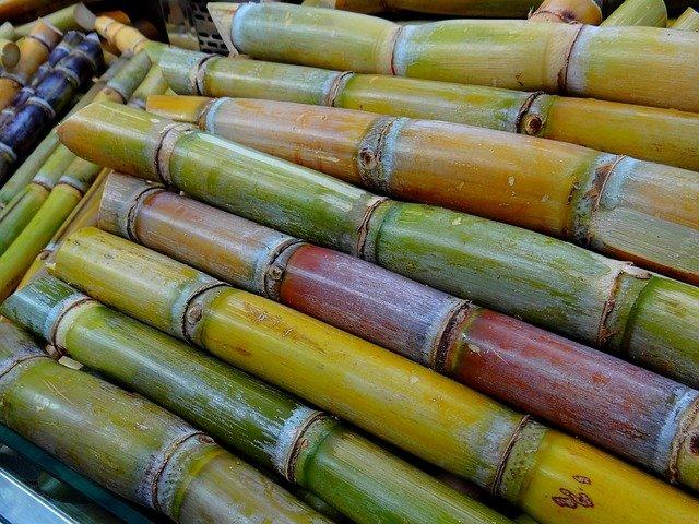 Buy Sugar Canes