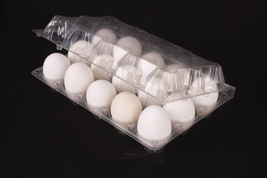 Buy Plastic Egg Tray