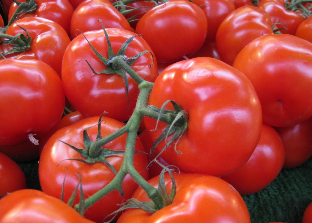 Buy Fresh Tomatoes