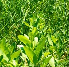 Herbicides Range
