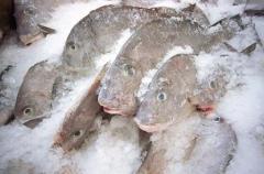 Frozen Fresh Seafood
