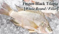 Frozen Black Tilapia