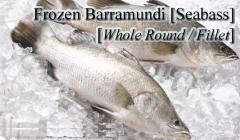 Frozen Barramundi