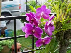 Flowering Inducer