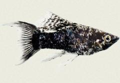 דגי ים לאקווריום