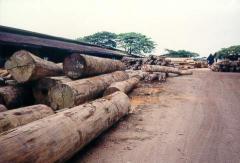 Keruing logs