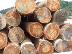 Red Meranti Timber
