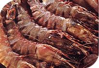 Shrimp Pathogens PCR Kits