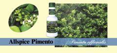 Allspice Pimento Massage Oil