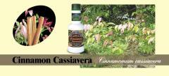 Cinnamon Cassiavera Massage Oil