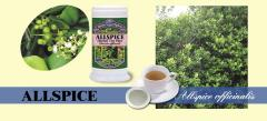 ALLSPICE Herbal Tea Plus (Large)