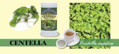 Centella Herbal Tea Plus (Large)
