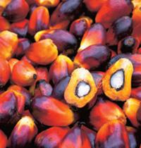 RBD Palm Kernel Oil – Usage :- ( Vegetable Oil )