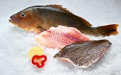 John Snapper Fish