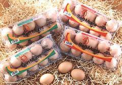 Seri Murni Premium Eggs