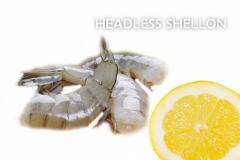 Headless Shellon
