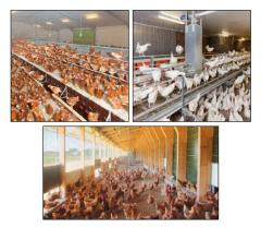 Egg production in modern poultry systems: NATURA
