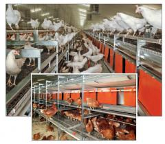 NATURA