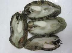 Scallop Frozen Local Abalone