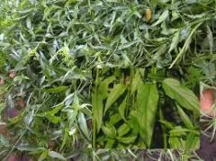 Vegetables Ulam gaja