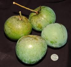 Mango Mangga Apel