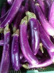 Eggplant Terung