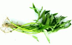 Organic vegetables kang kung