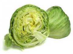 Organic vegetables Iceberg Lettuce