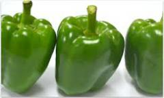 Vegetables cili kembung hijau