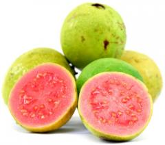 Organic fruits Guava