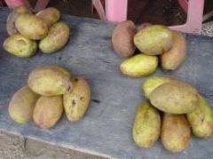 Exotic fruits Binjai