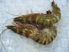 Frozen seafood prawn