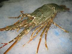 Frozen seafood lobster