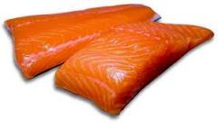 Fish, fresh frozen salmon