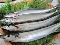 Fish, fresh frozen Japan Sanma