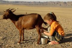 Goat Milk ar-Raudah