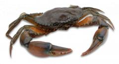 Seafood and sea products crab