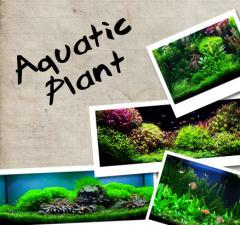 Aquatics Plants