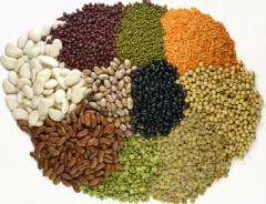 Beans, Pulses and Seeds