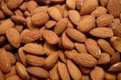 Almond,cashew nuts,pine nuts,pecan nuts,chestnut and macadamia nuts